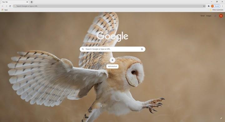 Flying_owl